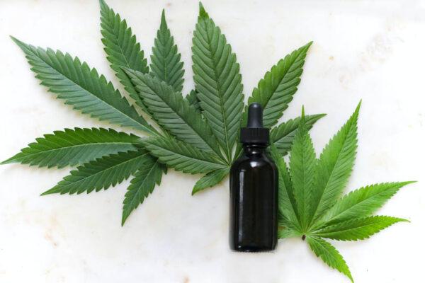 Hanf Öl und Blätter